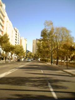 ÁRBOLES EN ZARAGOZA. SUGERENCIAS PARA UNA VÍA DE ACTUACIÓN POSITIVA Y PARTICIPATIVA