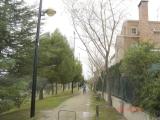 ARBOLADO PÚBLICO DEL DISTRITO DE CASABLANCA: GUIÓN DE LA CHARLA DADA EL PASADO LUNES 19 EN LA JUNTA MUNICIPAL DE DISTRITO
