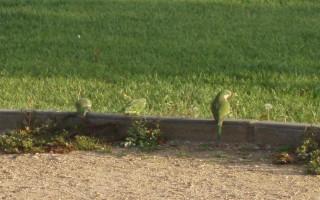 FLORALIA 2007: FERIA DE VALENCIA. PONENCIAS EN EL CONGRESO GEA XXI