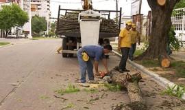 LIMPIEZA Y DESMALEZAMIENTO EN AVENIDAS, CALLES, PLAZAS, PARQUES Y POLIDEPORTIVOS DE CORRIENTES (ARGENTINA)