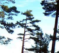 EL PROGRAMA DE LAS NACIONES UNIDAS PARA EL MEDIO AMBIENTE (PNUMA) LANZA UNA CAMPAÑA MUNDIAL PARA PLANTAR MIL MILLONES DE ÁRBOLES EN EL PLANETA