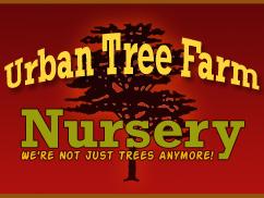 URBAN TREE FARM NURSEY: una web interesante sobre árboles y arbustos