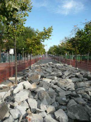 ALCORCÓN (MADRID): DENUNCIAN DESTRUCCIÓN DE ARBOLADO EN LA CONSTRUCCIÓN DE UN APARCAMIENTO