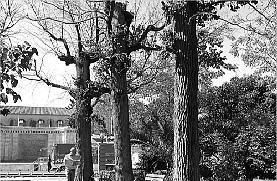 SEGORBE (CASTELLÓN): MALVIVEN CON LA GRAFIOSIS OLMOS CENTENARIOS DEL JARDÍN BOTÁNICO Y PIDEN LA DIMISIÓN DEL CONCEJAL DE PARQUES Y JARDINES