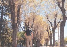 NEUQUÉN (ARGENTINA): NOTABLE PÉRDIDA DE ARBOLADO
