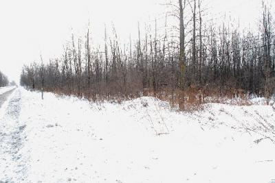 QUÉBEC (CANADÁ): BROSSARD PIDE UN BOSQUE A LA COMISIÓN DE PROTECCIÓN AGRÍCOLA DE QUÉBEC