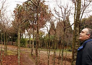 SANTIAGO DE COMPOSTELA: UN VIVERO PARA RECUPERAR Y SANAR PLANTAS